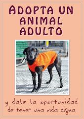 Adoptá un animal adulto