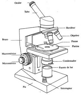 El microscopio óptico objetivo reconocer la función del microscopio
