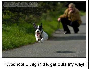 Runing dog
