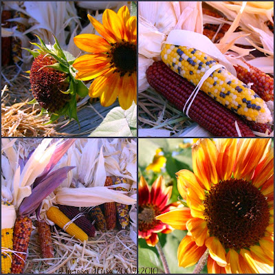 Sunflowers and Indian Corn, Photography