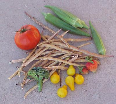 garden okra tomato