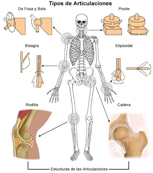 Types Joints Human Body