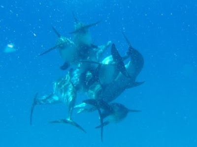 Dolphin Orgy