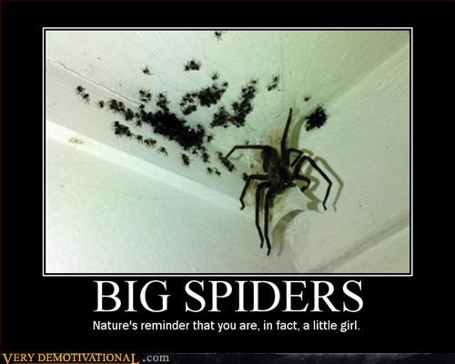 Big Spiders