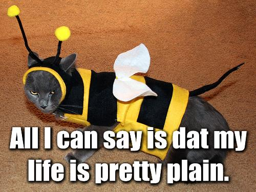 All I can say is dat my life is pretty plain. - lolcats