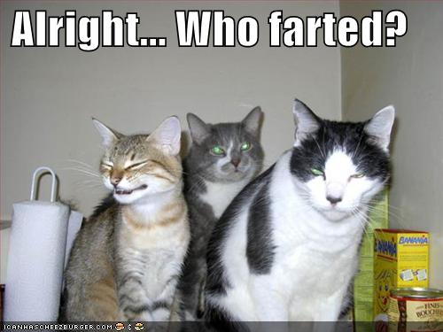 Alright... Who farted?