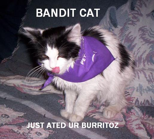 BANDIT CAT JUST ATED UR BURRITOZ