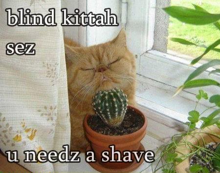 blind kittah sez u needz a shave