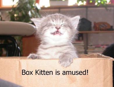 Box Kitten is amused!