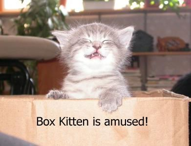 Box Kitten is amused! - lolcats