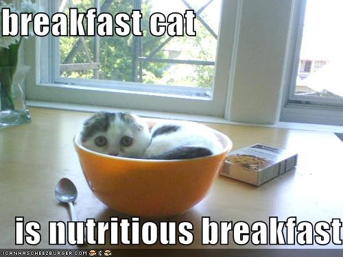 breakfast cat is nutritious breakfast