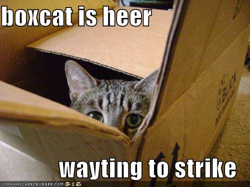 boxcat is heer wayting to strike