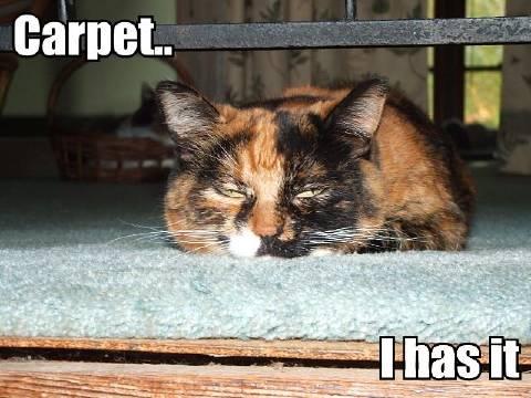 Carpet.. I has it