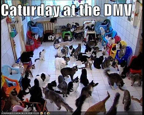 Caturday at the DMV