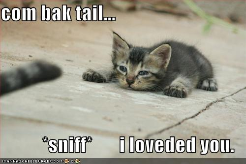 com bak tail... *sniff* i loveded you.