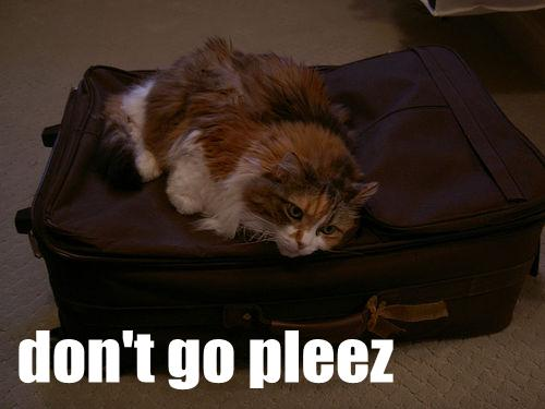 don't go pleez