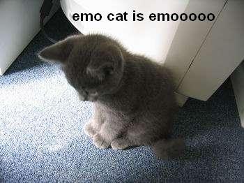 emo cat is emooooo