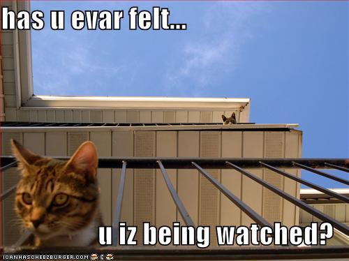 has u evar felt... u iz being watched?