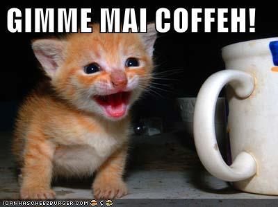GIMME MAI COFFEH!
