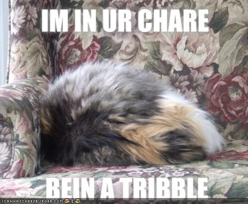 IM IN UR CHARE BEIN A TRIBBLE