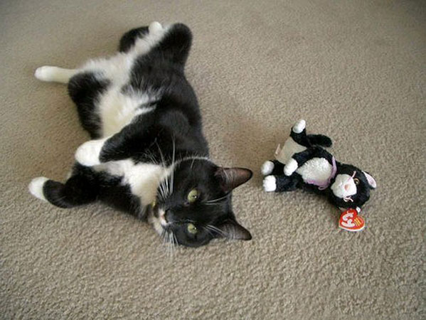 Cat Twins