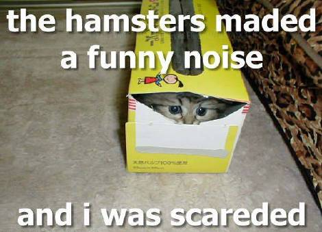 the hamsters maded a funny noise