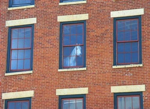 White Horse in the Window