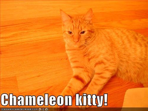 Chameleon kitty