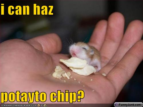 i can haz potayto chip