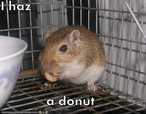 I haz  a donut
