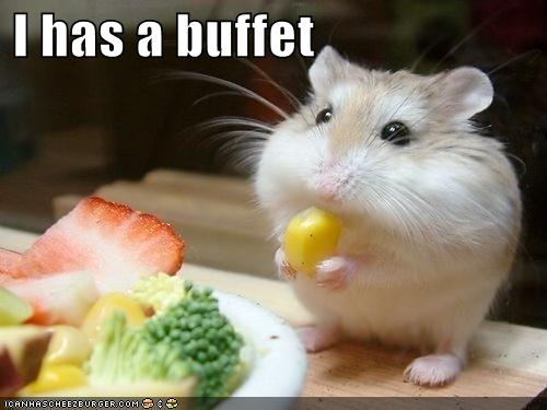 I has a buffet - Funny Animal Pics