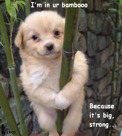 I'm in ur bambooo Because it's big, strong
