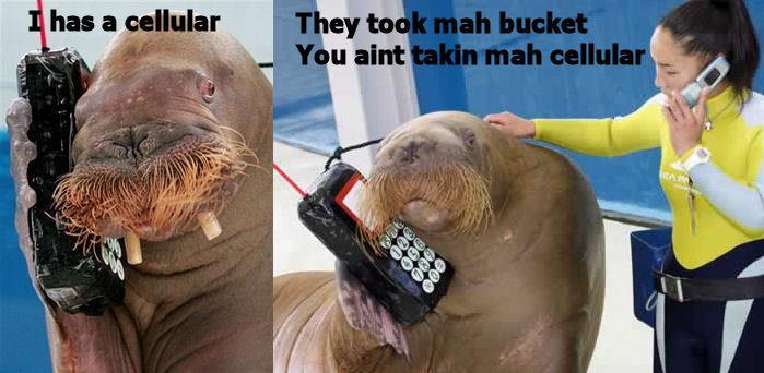 I has a cellular