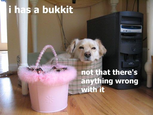 i has a bukkit not that there's anything wrong with it