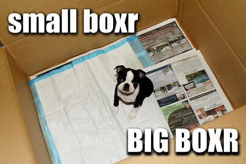small boxr BIG BOXR