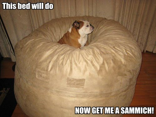 This bed will do NOW GET ME A SAMMICH!