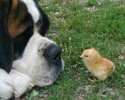 http://4.bp.blogspot.com/_taPC-1l2iog/RvdifSC9_hI/AAAAAAAAFHc/XDE7obG4ddw/s400/37_animals_23855.jpg