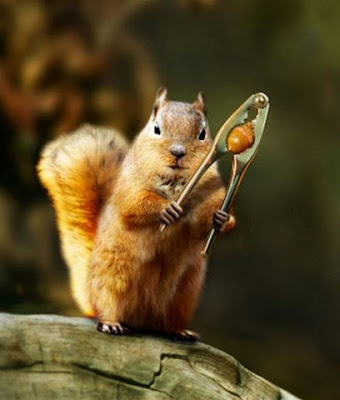 Wallpapers star collection animals photos wild animals pictures cute cats funny wallpapers ipad Nutcracker squirrel