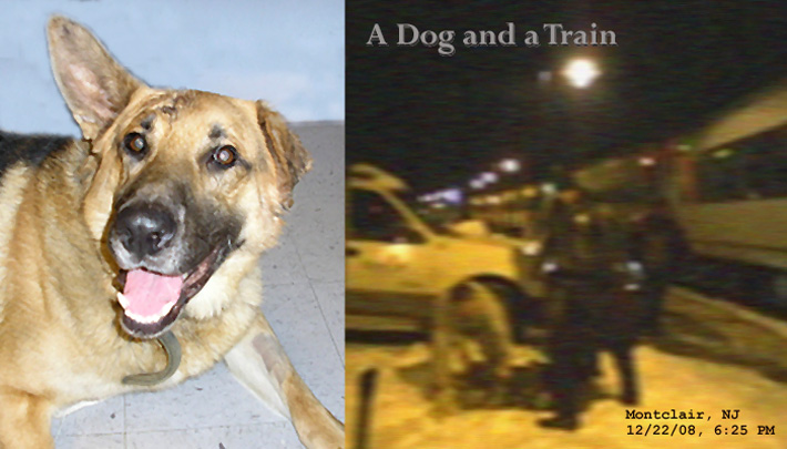 A Dog and A Train