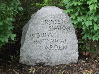 Rosemary 39 S Sampler Rodef Shalom Biblical Botanical Garden