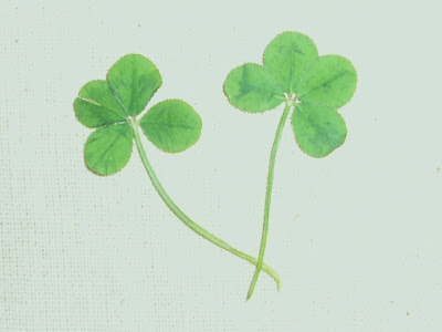 Two Four-Leaf Clovers