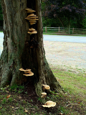 Mother Nature fairy houses