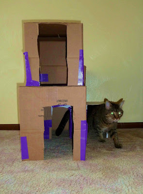Kitty Condo Wind-Around and Backdoor Exit