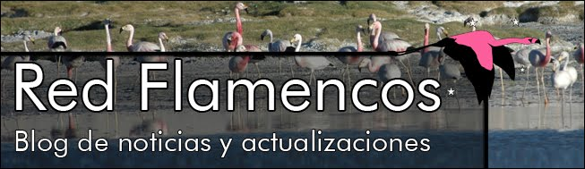 Red Flamencos