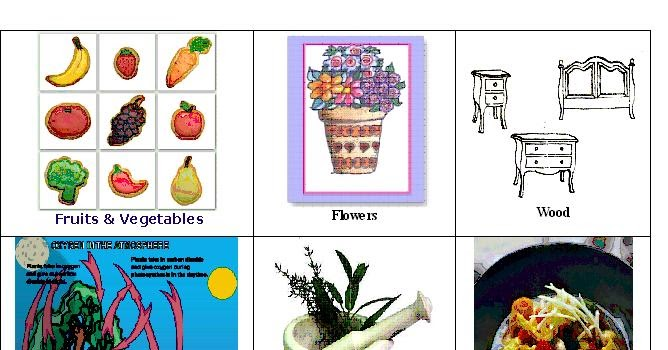 Avon Book Centre: Things We Get From Plants