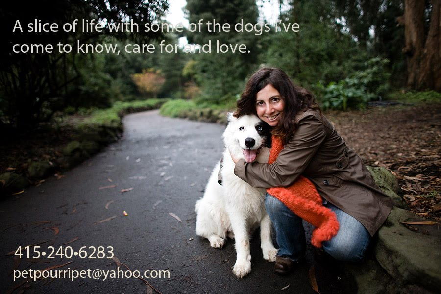 A slice of life with some of the dogs I've come to know, care for & love