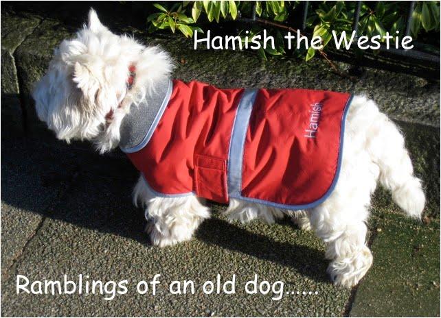 Hamish the Westie