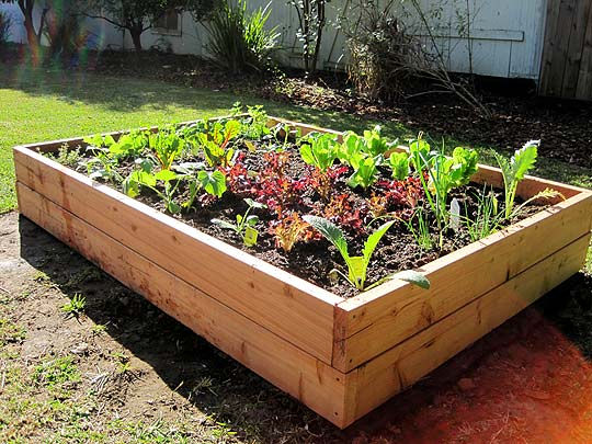 At home at home diy raised bed vegetable garden for Diy vegetable garden