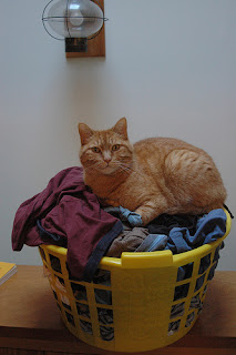 cat on full laundry basket