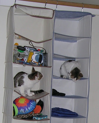 kittens in hanging organizer